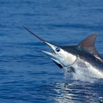 Fun and Excitement of Sport Fishing In Hawaii