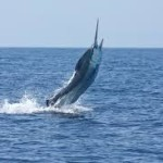 Marlin Fishing Hawaii: An Awesome Experience