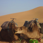 Consider Travelling to Morocco This Vacation