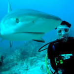 Scuba Diving with Oslob Whale Sharks: An Amazing Experience for Lifetime